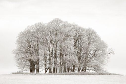 Dinefwr Park, Llandeilo, Carmarthenshire Wales