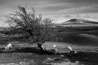 Fan Foel, Black Mountain, Carmarthenshire Wales